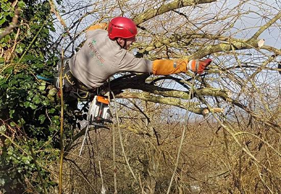 Abattage et élagage des arbres à Bousbecque